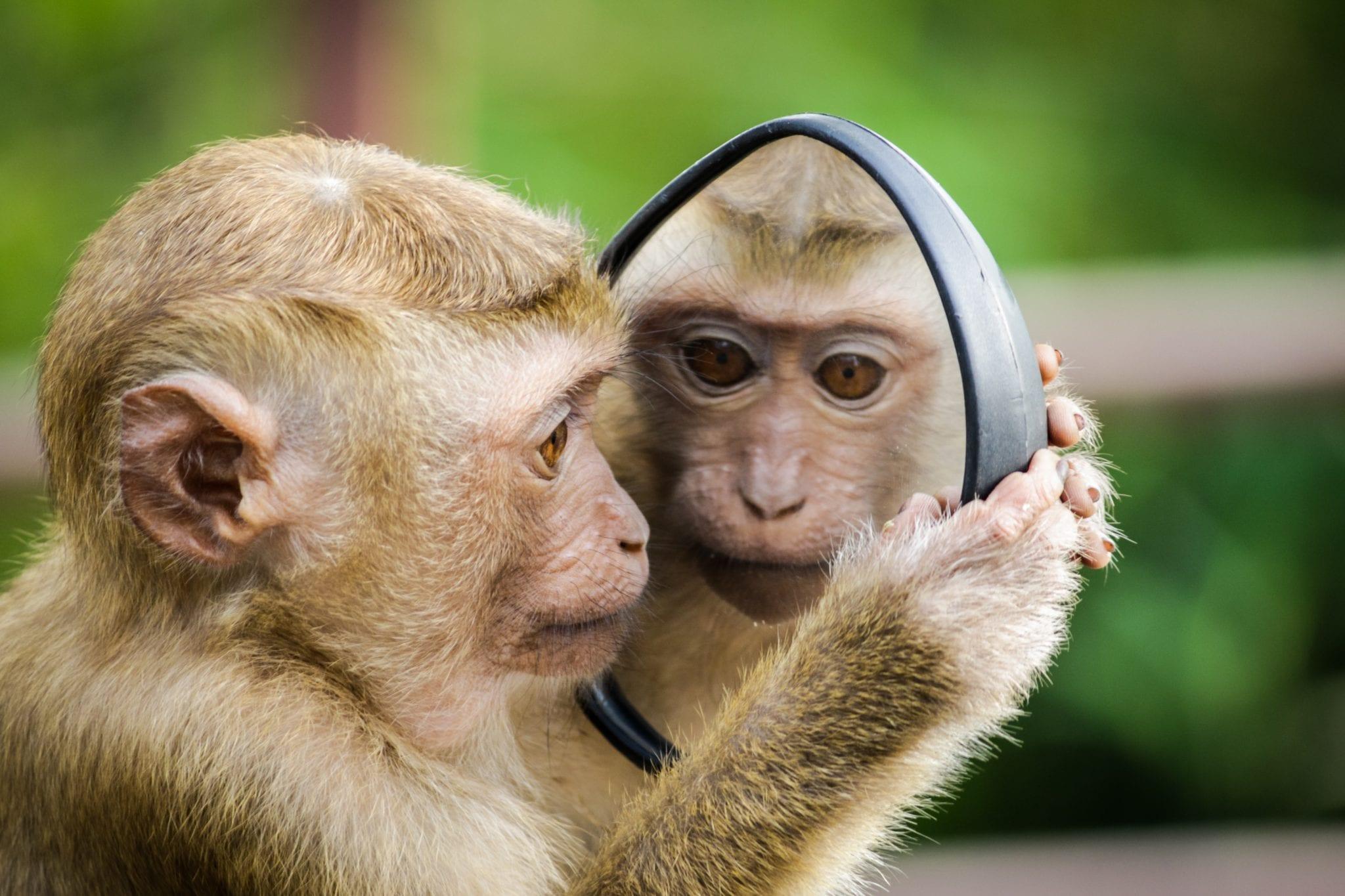 Monkey Magic