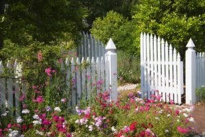 White picket fences may not be all they are cracked up to be